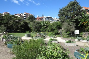 garden may 2013 004