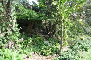garden may 2013 010