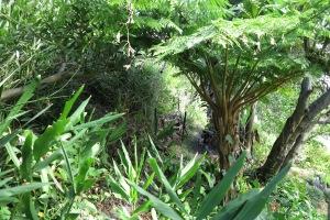 garden may 2013 011