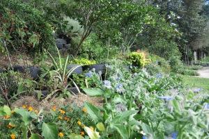 garden may 2013 013