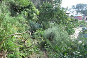 garden may 2013 014