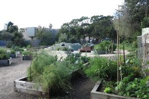 garden may 2013 024